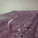 Gardening by the sea