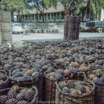 Baskets of Pineapple at the Lee Pineapple Company