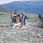 Two people shearing sheep on a hillside