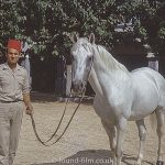 Man wearing a Fez with a White horse, September 1970