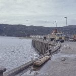 Loading fish on the Jetty at Ullapool - 1967