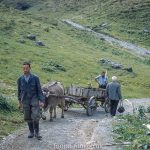 A cart on a mountain path in Switzerland c1961