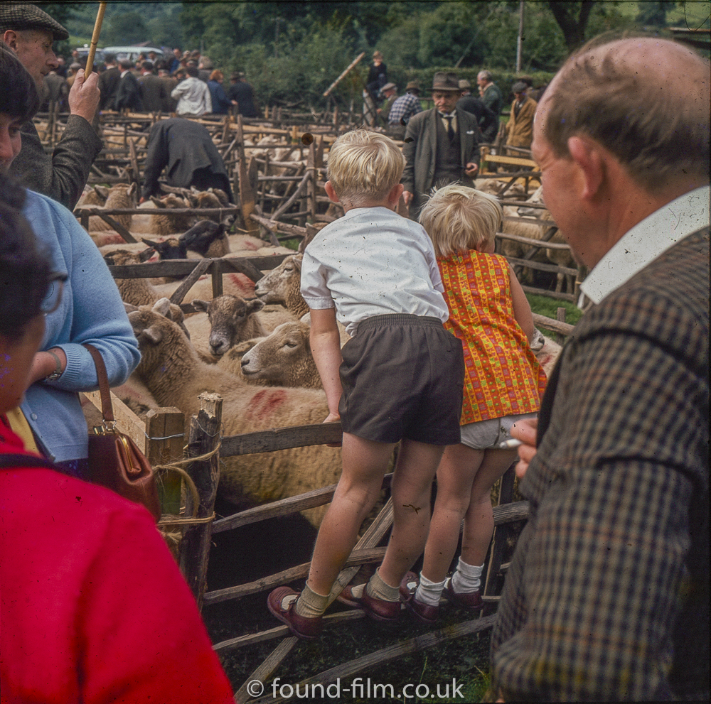 Children at a sheep auction